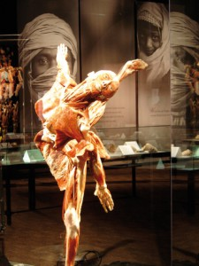 BODY WORLDS & The Brain Copyright: Gunther von Hagens, Institut für Plastination, Heidelberg, www.koerperwelten.de