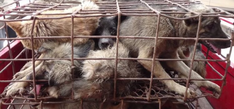 BITTE UNTERZEICHNEN UND TEILEN – Gegen Hundefolter- und schlachtfest in China