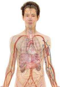 Anatomie_geralt_Pixabay