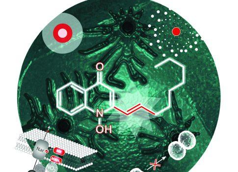 Konkurrenzkämpfe unter Krankheitserregern – Chance für neue Antibiotika