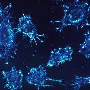 Krebszellen mit den eigenen Waffen schlagen