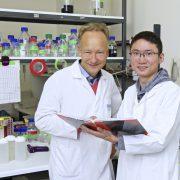 Chronische Abstoßung von Nierentransplantaten vielleicht bald lösbar