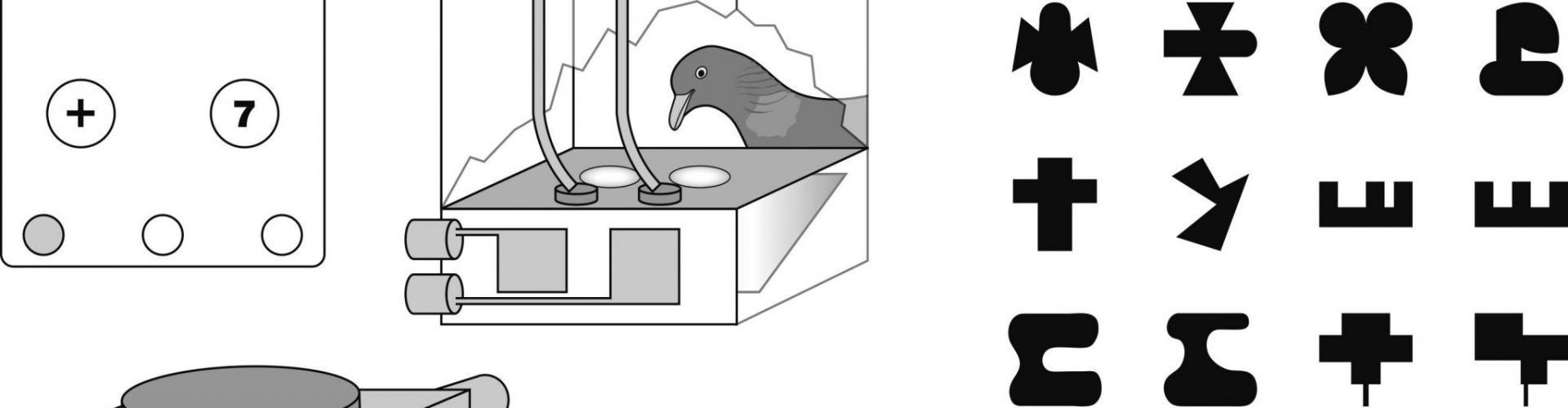 Der sechste Sinn der Tauben für Symmetrie