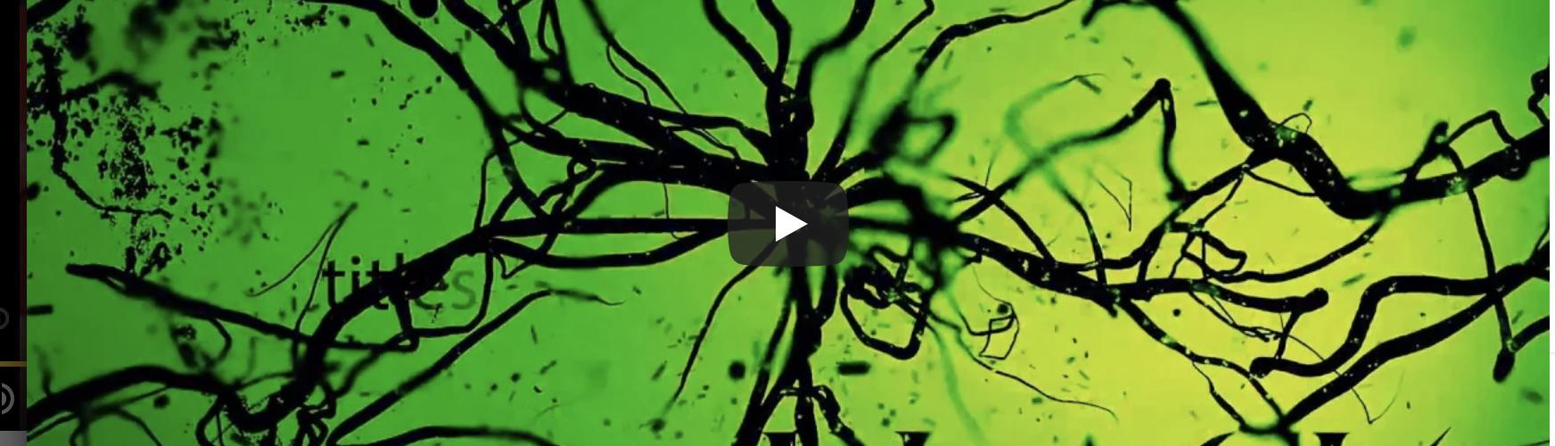 """Symphony X-Gitarrist Michael Romeo veröffentlicht erstes Soloalbum – """"War of the Worlds / Pt. 1"""" erscheint am 27. Juli!"""