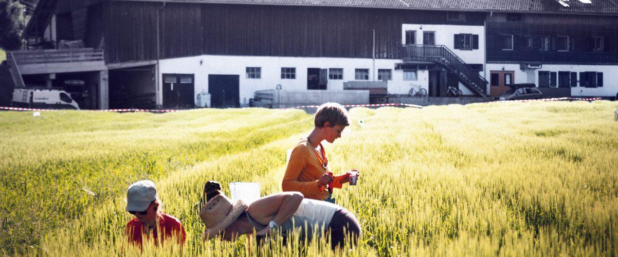 Mistdüngung stärkt Nützlinge im Feld