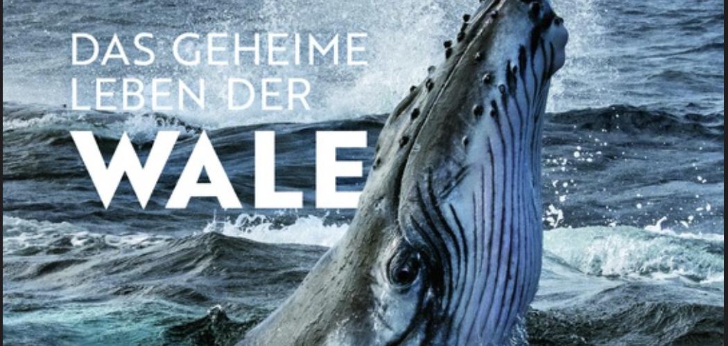 Das geheime Leben der Wale– National Geographic – Brian Skerry